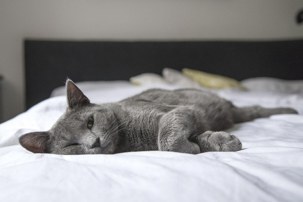 ベッドに寝そべるネコ